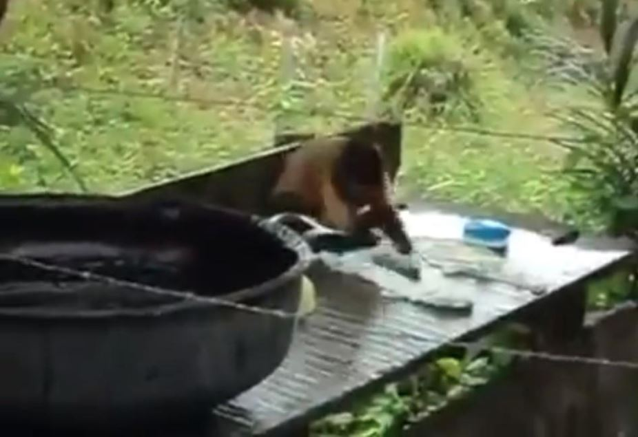 monkey viral video