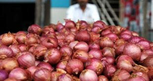 Onion Price, Onion Farmer,